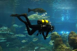 How do oceanographers study the ocean