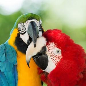 Introduction to Ornithology