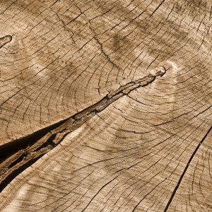 Dendrochronology dating techniques