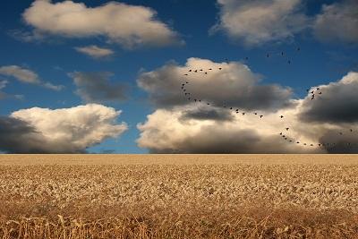 Birds Crops