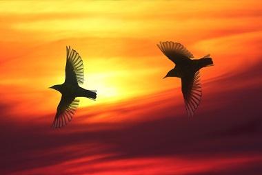 Birds Culture