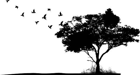 Birds & Ecosystem Services