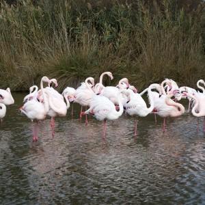 Signs Of Spring In Urban Wetland Little >> Birds As Environmental Indicators Environmentalscience Org