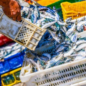 Environmental Consequences of Fishing Practices