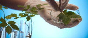 environmental-geneticist