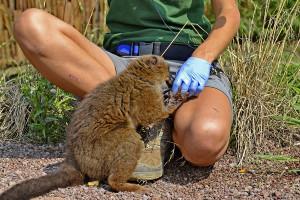 mammalogist
