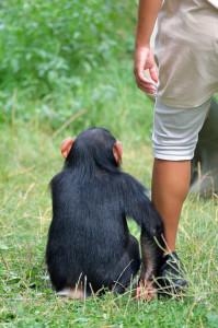 primatologist