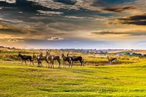 how to become a wildlife carer sa