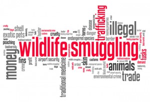 How To Become A Wildlife Forensics Specialist Environmentalscience Org