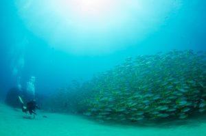 Biological Oceangrapher