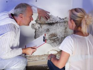 How to Become a Mold Remediation Technician | EnvironmentalScience org