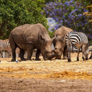 Zoology Exploring The Animal Kingdom As Academic Pursuit
